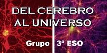 08.3º ESO Del cerebro al Universo