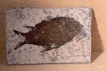 Pez (Pez) Paleoceno
