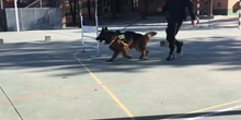 La Unidad Canina de la Policia Municipal de Las Rozas visita el cole_CEIP FDLR_Las Rozas_2017  5