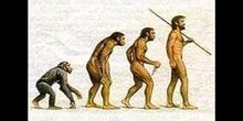 """Australopithecus afarensis: """"Lucy"""""""
