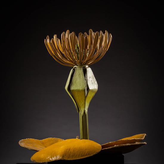 IES_SANISIDRO_MUSEO_Botanica_012