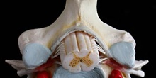 Estructura de Vértebra
