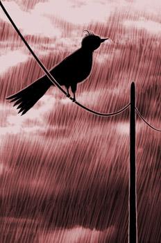 Los tres amigos: El pájaro heraldo
