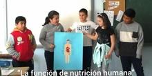 LA FUNCIÓN DE NUTRICIÓN HUMANA