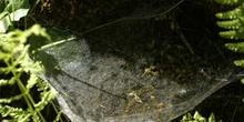 Tela de araña (Araneae Ord.)