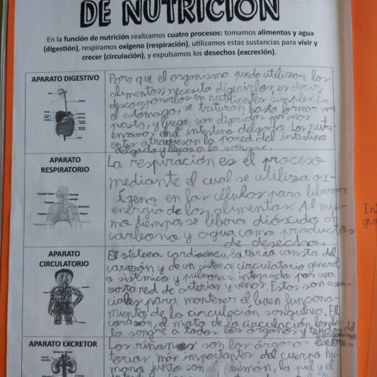 [Lapbook] - Mi atlas del cuerpo humano (3º de primaria) - IMAGEN 6