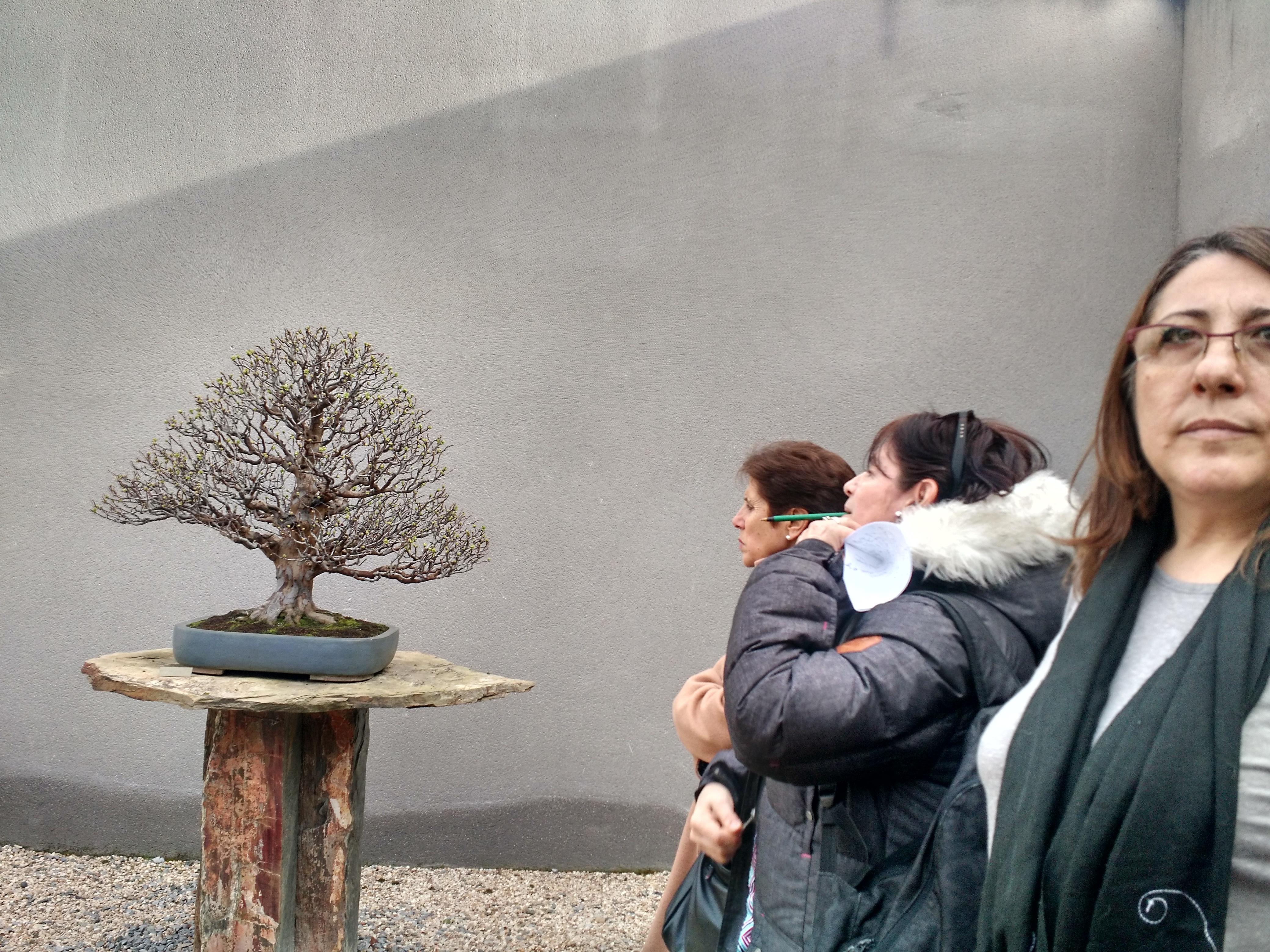 Museo del Bonsai 5