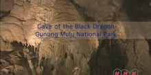 Cave of the Black Dragon: Gunung Mulu National Park: UNESCO Culture Sector