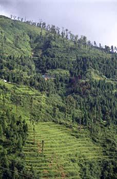 El Tren de Juguete por la montaña, Darjeeling, India