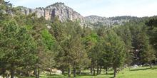 Bosque en las inmediaciones de la Laguna Negra, Soria, Castilla