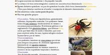 T.9.4.Los artrópodos