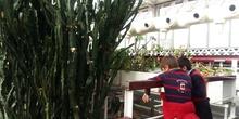 PLANTS 14