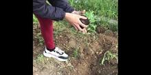 Nuestras Plantas Aromáticas