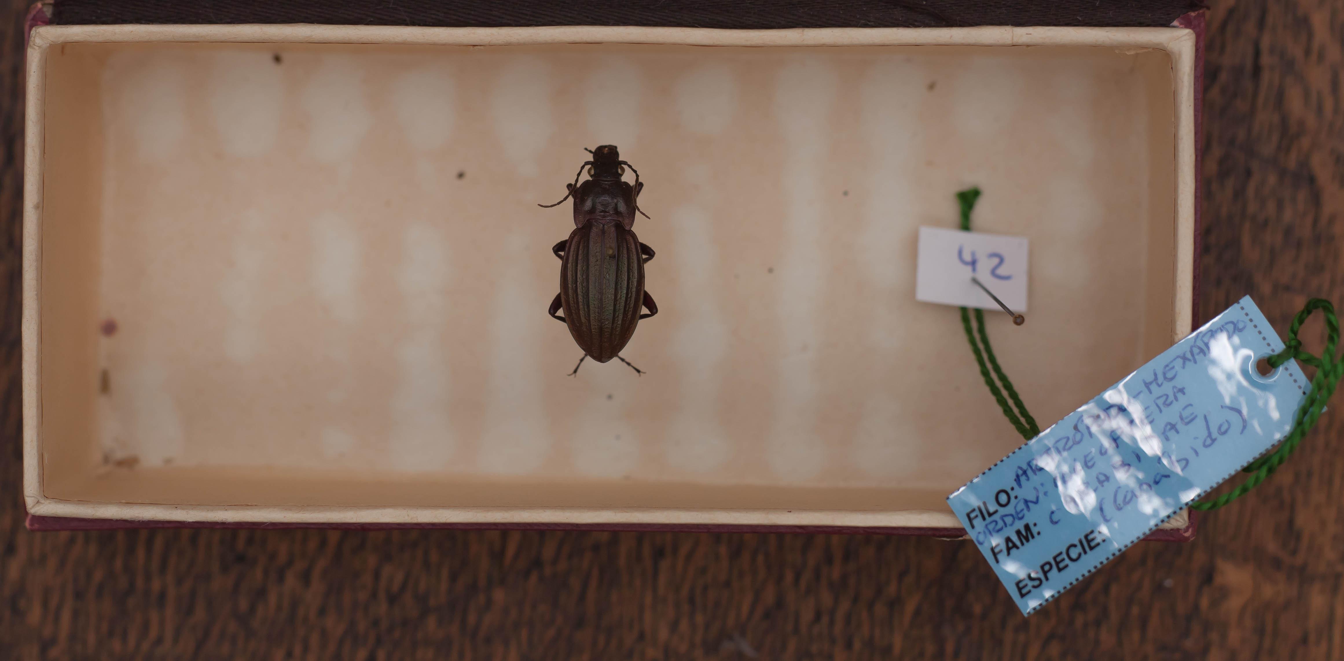 IES_CARDENALCISNEROS_Insectos_014