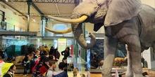 Excursión al Museo Nacional de Ciencias Naturales 6