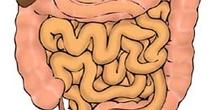 Intestinos humanos