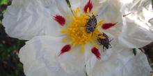 Fecundación de la flor