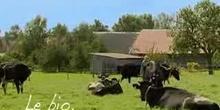 L'agriculture biologique. Bon pour la nature, bon pour vous!