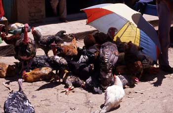 Puesto de venta de aves en San Cristóbal de las Casas, México