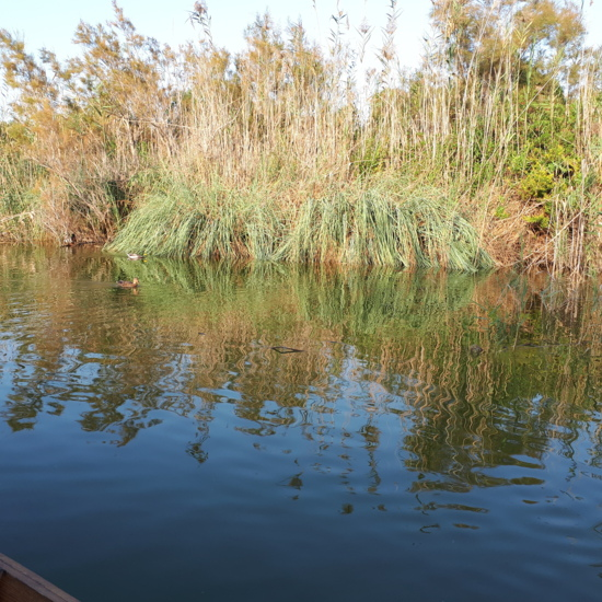 Vista de una laguna