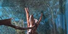 Excursión al zoo 5 años, 1º y 2º Luis Bello 28