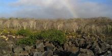 Arcoiris sobre un bosque de palosanto, Ecuador