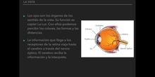 6º naturales la función de relación, los órganos de los sentidos