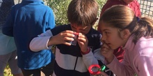 2019_06_11_4º observa insectos en el huerto_CEIP FDLR_Las Rozas 1