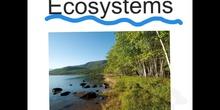 PRIMARIA 5ºCIENCIAS DE LA NATURALEZATYPES OF ECOSYSTEMS
