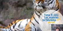 Tema 8 (II) Los animales vertebrados (I)