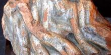 Arthrophycus alleghanien (Huella) Ordovícico